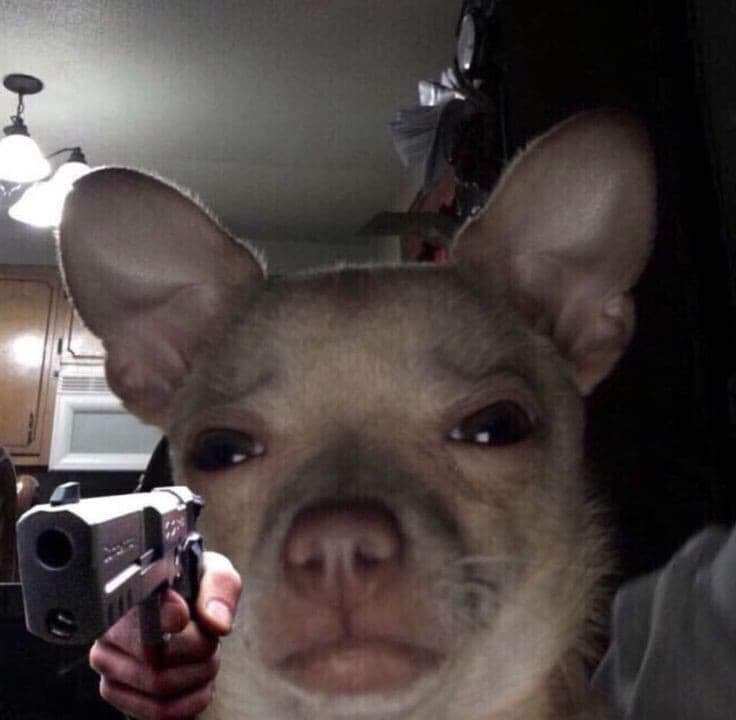 Ptsd Chihuahua Meme Original Image - Pets Lovers
