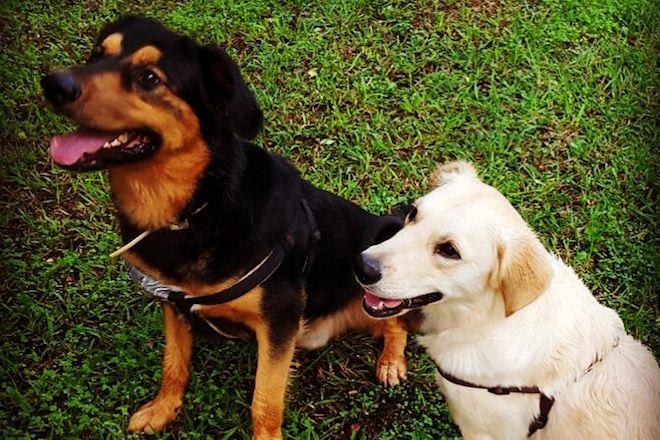 Tipps für die Begegnung mit fremden (wilden) Hunden