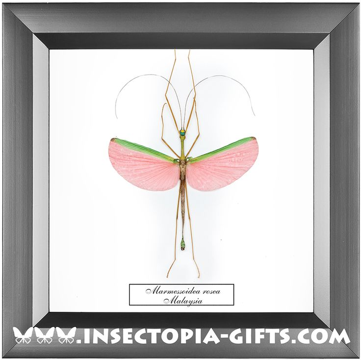 Framed butterflies, beetles and other insects.Decor, , design, stylinghandmade, idea, art, gift.