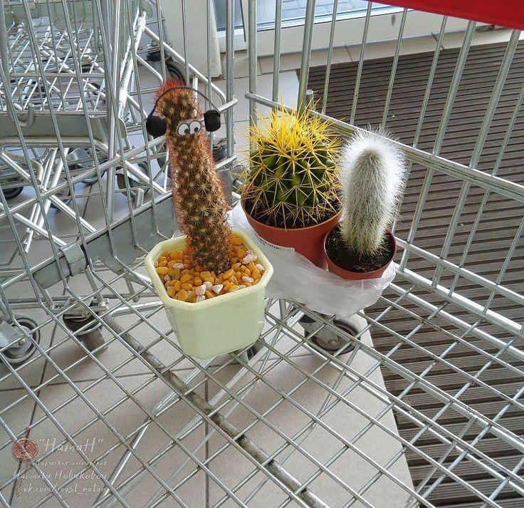 Геннадий поехал знакомиться с новыми друзьями _ _____ #кактусГеннадий #путешествиекактусаГеннадия #cactus #cactusGennady
