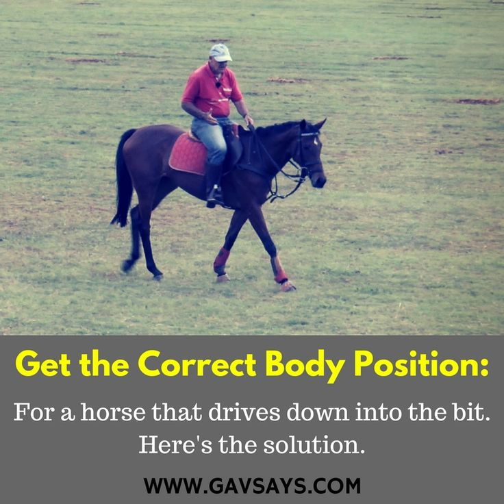 GavSays.com: Get the Correct Body Postion: You must always be aware of what work your horse needs. For Promise, a horse that dove into the bit, it was to get the correct body position...