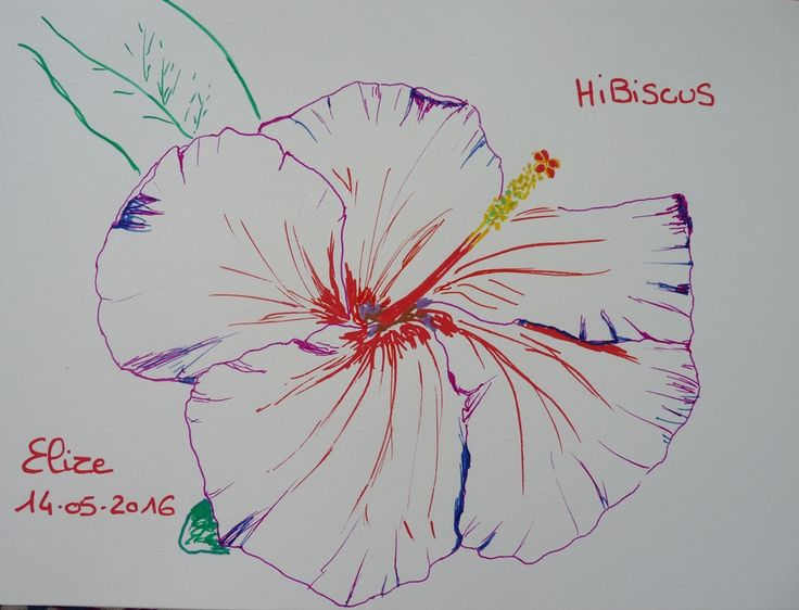 55 best fleurs exotiques images on pinterest | drawings, drawing