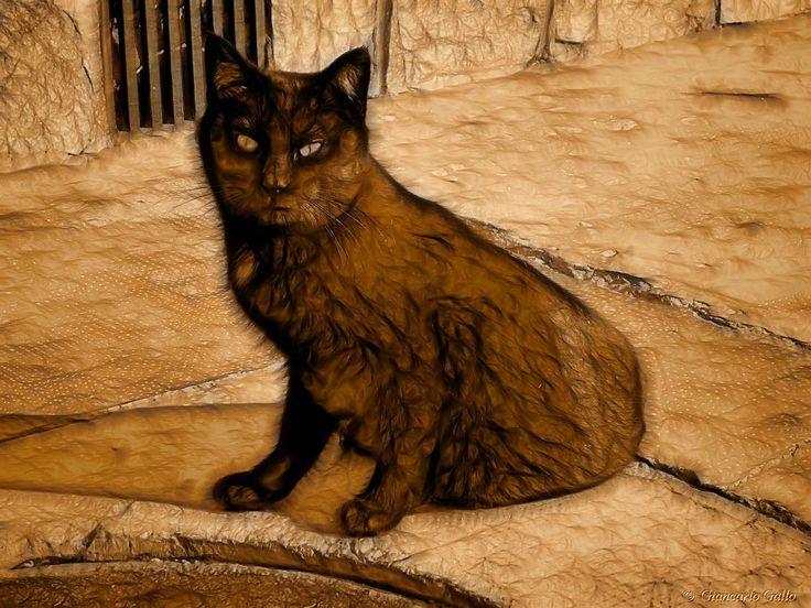 Black cat by Giancarlo Gallo