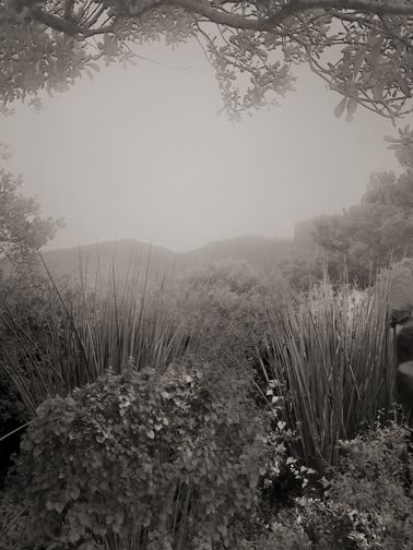 Botanic garden in SA. Photographed by Anna Mizgajska.