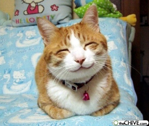 Sweet...: Happy Faces, Happy Kitty, Animal Pictures, Kitty Cat, Smile Cat, Funny Cat, Happy Cat, Funny Animal, Hello Kitty