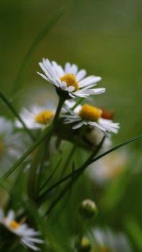 Amelie Emily, Kwiatki- Piękne tapety na Twój pulpit.