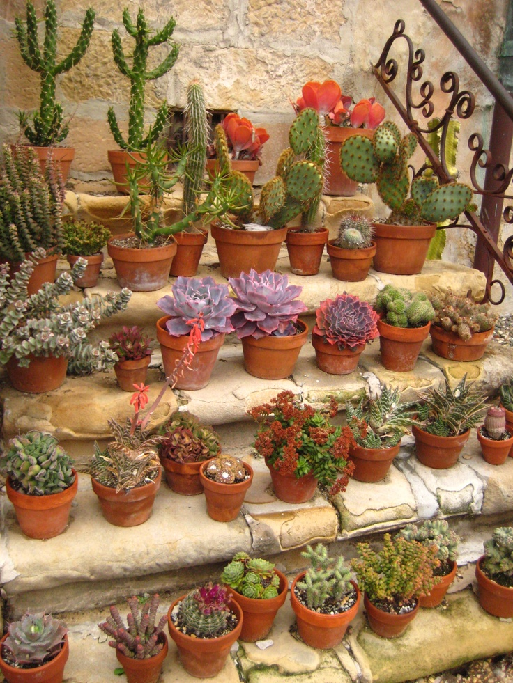 17 Best 1000 images about Cactus Garden on Pinterest Gardens
