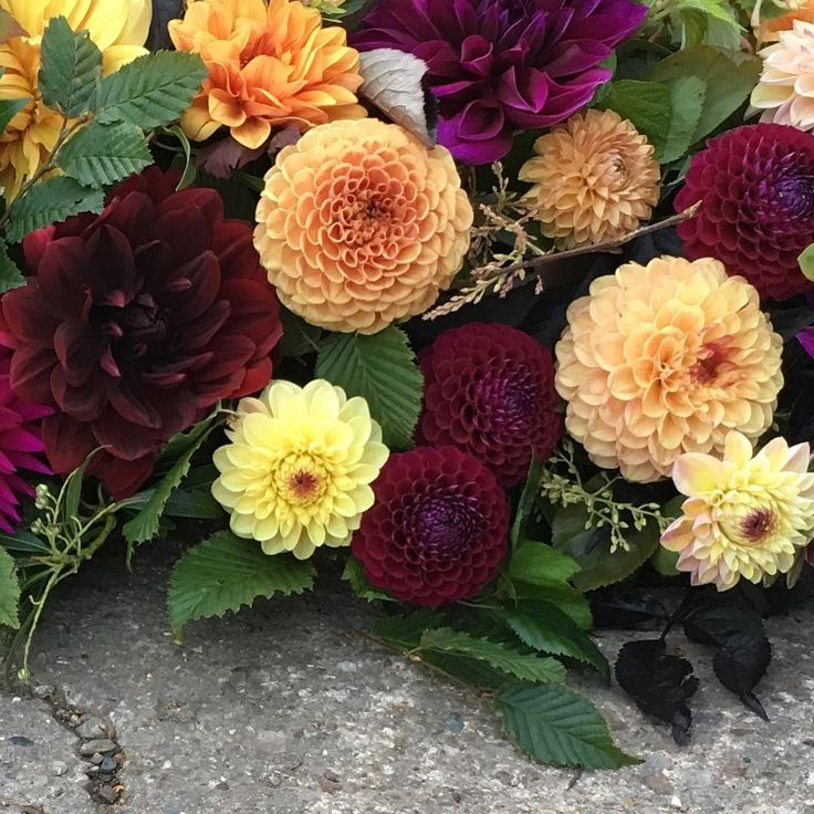 Autumn hues and texture 😍 A British love affair 😍 #britishflowers #underthefloralspell #autumnlove #loveautumn #huddersfield #yorkshire #grownnotflown