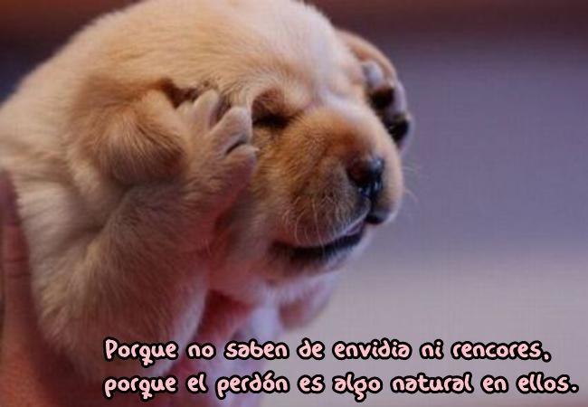 Porque no saben de envidia ni rencores, porque el perdón es algo natural en ellos.♡♡♡
