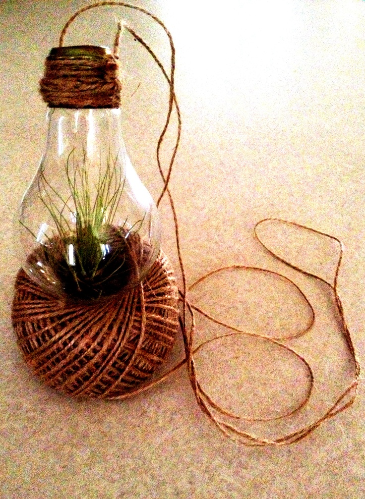 DIY light bulb air plant #growinspired