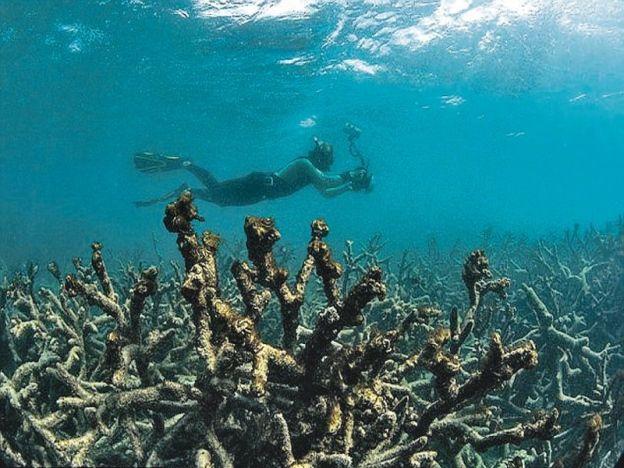 Saintis cipta teknik selamatkan terumbu karang   Fenomena pelunturan ini pernah berlaku pada 1998 dan 2002.  ANCAMANyang semakin meningkat menyebabkan saintis merumuskan formula untuk mencegah kematian terumbu karang yang boleh menjejaskan populasi hidupan marin. Menurut laporan Science World pakar telah mencari teknik yang mungkin dapat menyelamatkan terumbu karang tersebut. Penyelaras bagi Pemerhati Terumbu Karang di Pentadbiran Atmosfera dan Lautan Kebangsaan (NOAA) Mark Eakin memberitahu…