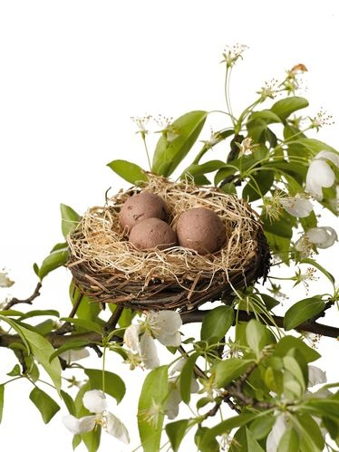 "Flowering Seed Nest - The three ""eggs"" nestled in this charming nest are Seedballz, which contain a mix of seeds to attract butterflies and hummingbirds. They're made from an all-natural blend of flower seeds, clay and humus, which provides a protected place for seeds to sprout and grow."