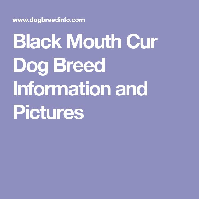 Black Mouth Cur Dog Breed Information and Pictures