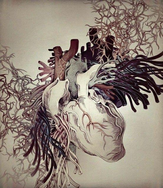 Anatomie du coeur.                                                                                                                                                                                 Plus