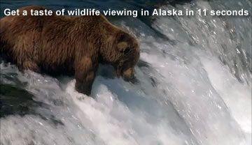 Travel Alaska - Wildlife Viewing in Alaska