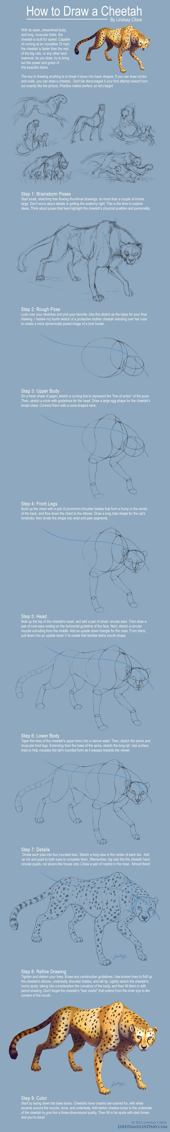 How To Draw A Cheetah by LCibos.deviantart.com on @deviantART