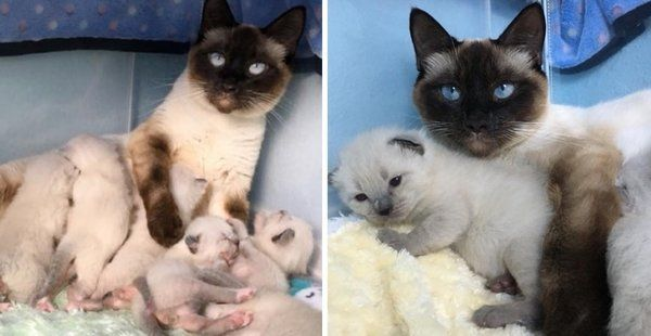Stray Cat Gets A Safe Home To Raise Her 6 Kittens She Won T Leave Their Side Stray Cat Cats And Kittens Kittens