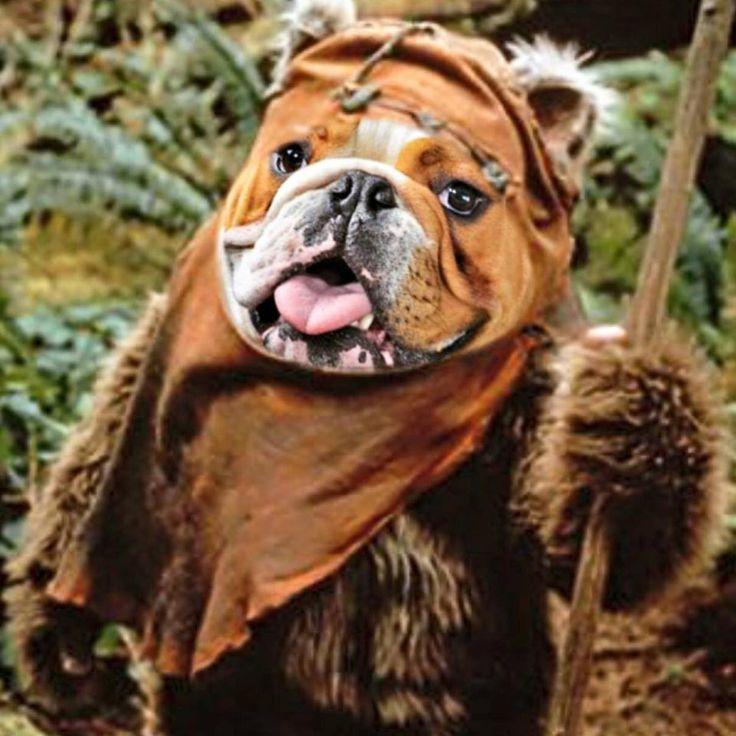 Bulldog Costumes – BaggyBulldogs