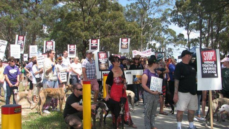 Protest against proposed Logan Greyhound Track | Pet Levrieri Onlus - Salva e adotta un levriero  pls sign and share