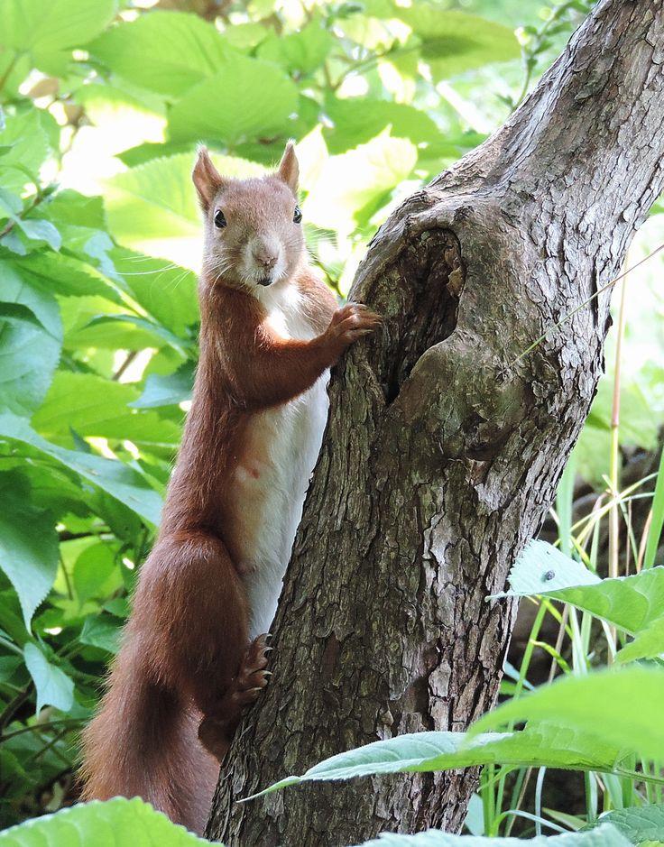 Photography by Daniela Faber +++ Squirrel +++ Eichhörnchen écureuil ardilla scoiattolo