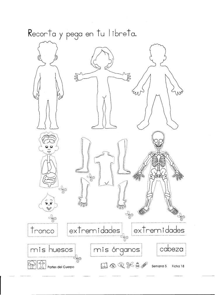 Partes del cuerpo: Recortables 1er Grado                                                                                                                                                      Más