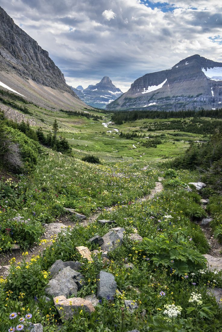 Preston Park- Wildflowers | NPS / Tim Rains | Glacier National Park, Montana | pinned by http://haw-creek.com