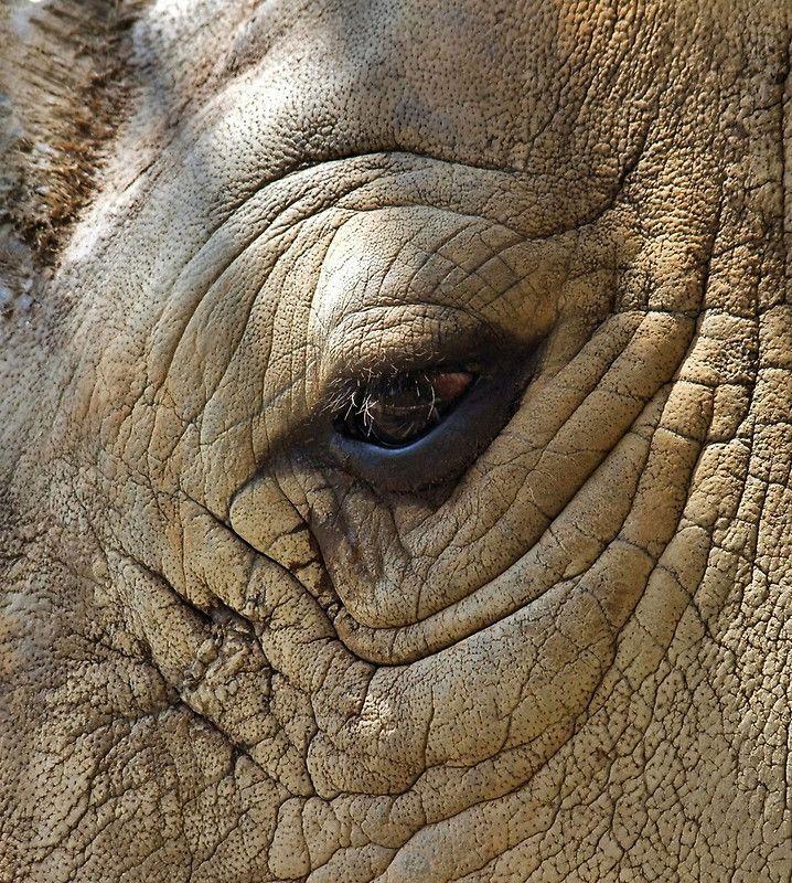 "Rhino Skin Texture | Eye Of The Rhino"" by RickDavis | Redbubble"