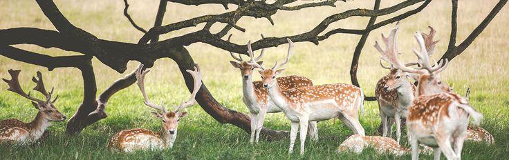 Selección de las mejores rutas para ver animales, excursiones, paseos y planes para disfrutar en familia de la flora y fauna de nuestro país.