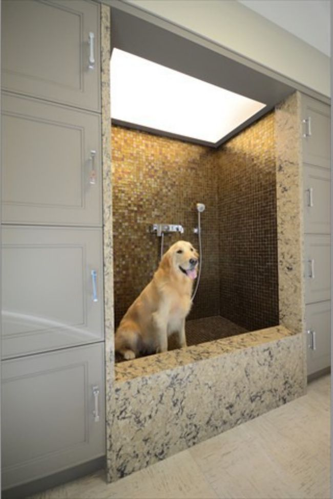 96 Best Images About Dog Wash Dog Bath On Pinterest