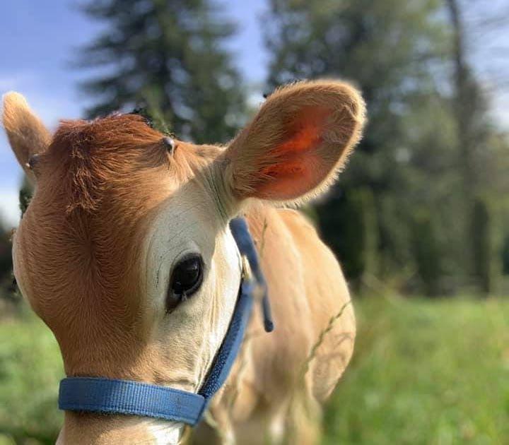 Pin By Cutegirluglyselfie On Web Pixer Cow Handsome Meet