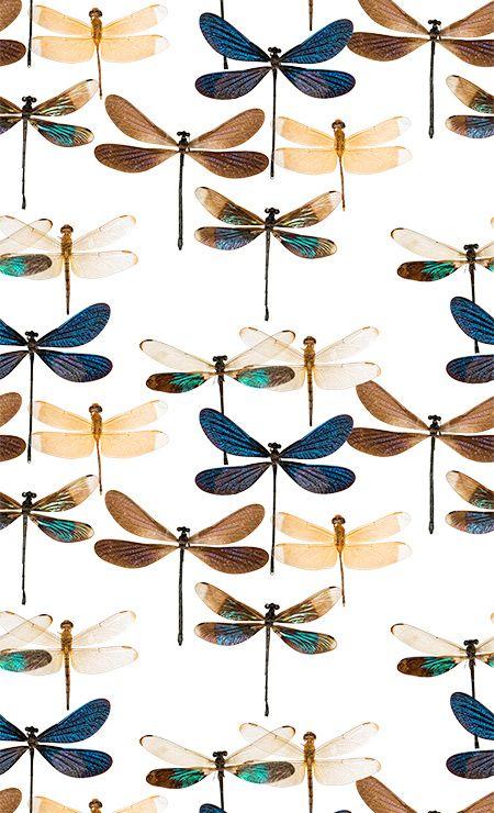 Papier Peint Libellule - Curious Collections