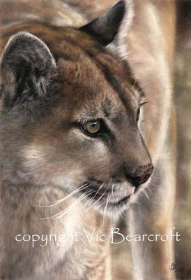 Vic Bearcroft is a self-taught professional wildlife and pet portrait artist, who specialises in pastel on velour, but also works in pencil, watercolour, coloured pencil, charcoal and acrylic media. Having spent part of his childhood in Kenya, Vic has been drawing animals since he could hold a pencil. #bigcatart #bigcat #wildlifeart