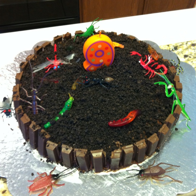 Bug birthday cake... Kit-Kat fence with gummy worms and crushed Oreos!