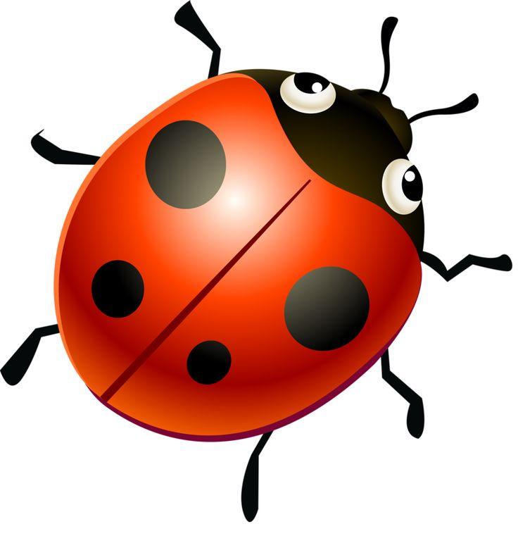 704 Fantastiche Immagini Su Ladybug Su Pinterest