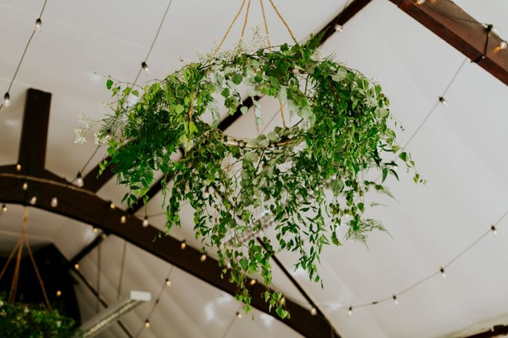 Stunning green 'chandeliers' and festoon lighting helped bring the Wytham Village Hall to life for this wedding. Florist - Dandy, Oxfordshire. Photo by Benjamin Stuart Photography #weddingphotography #chandelier #countrywedding #ceilingdecor #festoon #lighting