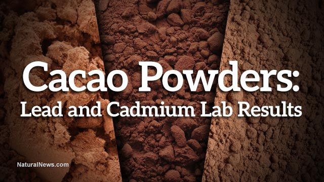 ConsumerLab, Natural News Labs both confirm high levels of toxic cadmium in popular cacao powders 6-12-14 cadmium is a TOXIC heavy metal High levels of lead have also been found. Cacao NIBS tend to be significantly lower in cadmium and other heavy metals