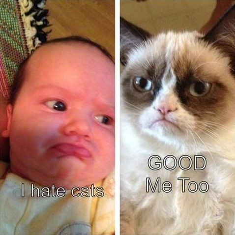 Grumpy Baby and Grumpy Cat Hate Cats