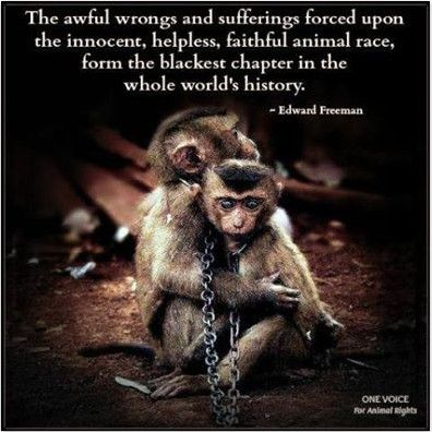 Animal Abuse Quotes By Famous People
