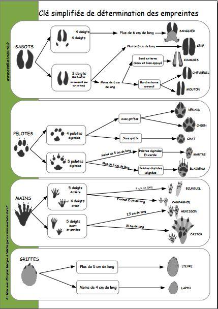 Pour les balades dans la nature: clé de détermination des empreintes d'animaux