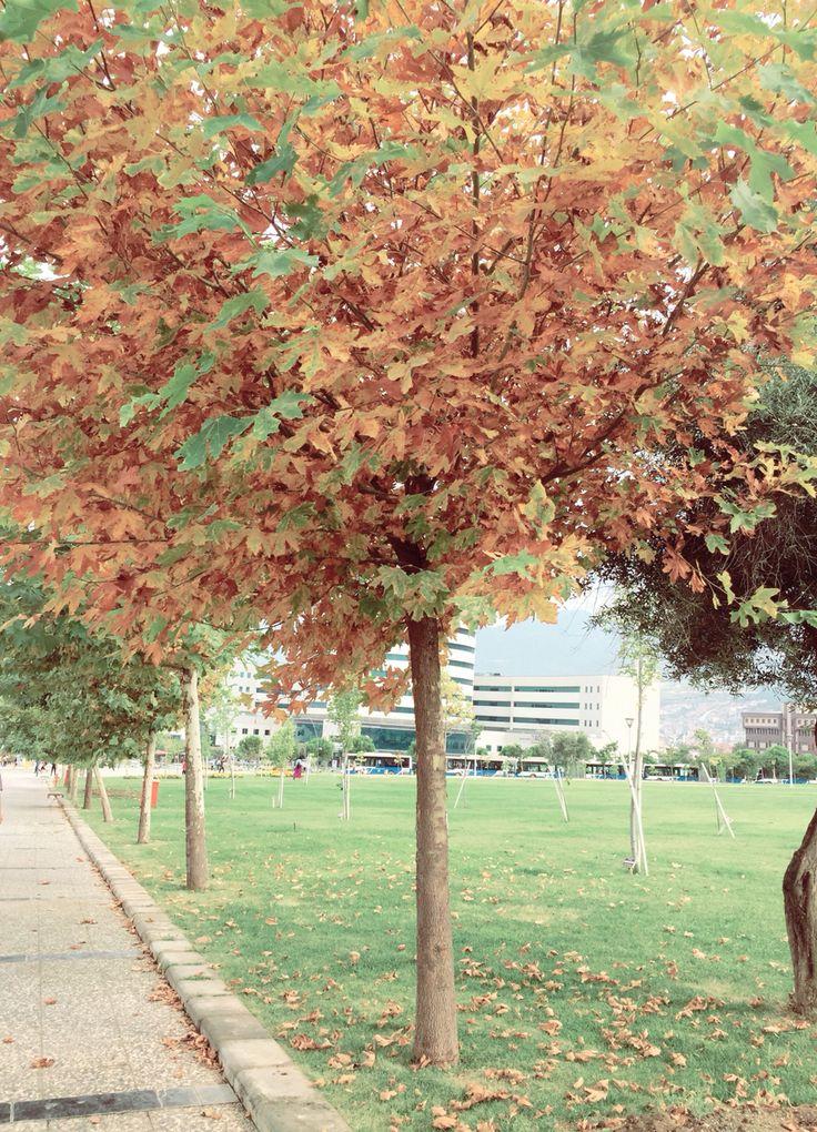 Tree, autumn, nature, life, road 🌲🍂🍁🐿
