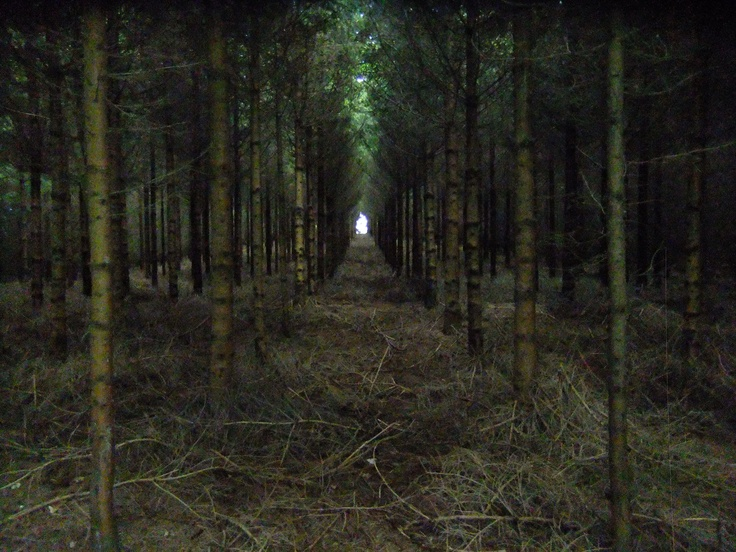 ... a small forest in Champagne, France - a 'natural cathedral'