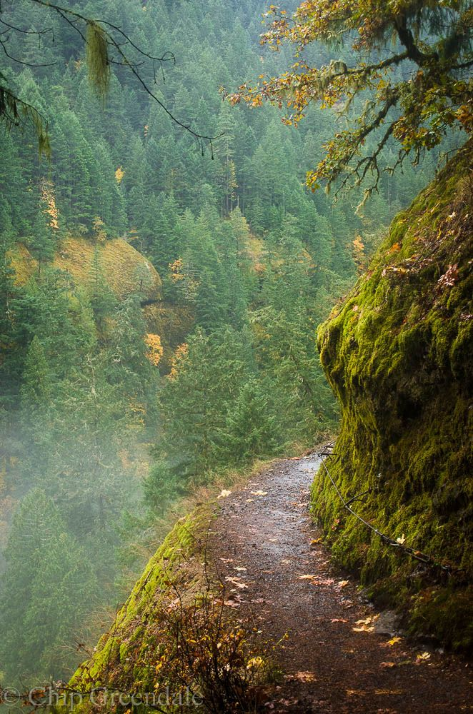 dirt trail in Eagle Creek Oregon 371