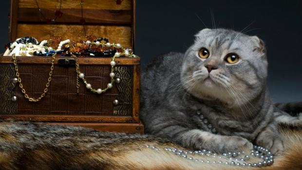 Os gatos que valem ouro Filhotes de raças raras podem custar o mesmo que uma Ferrari