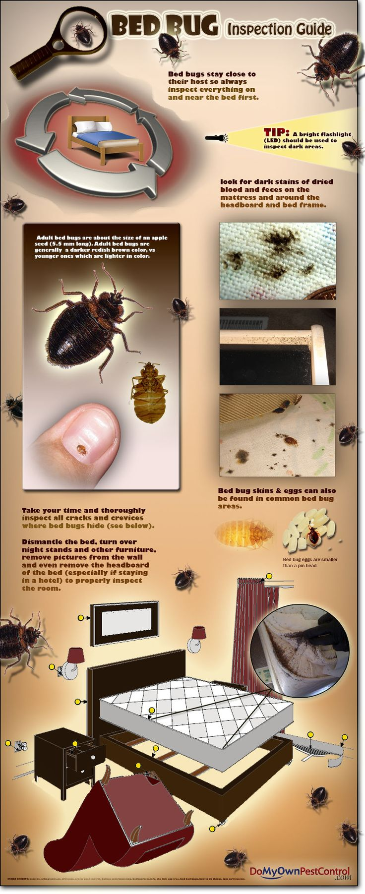 Bed Bug Inspection - A guide on how to do your own bed bug inspection. ~ via www.domyownpestcontrol.com/bed-bugs-c-39.html