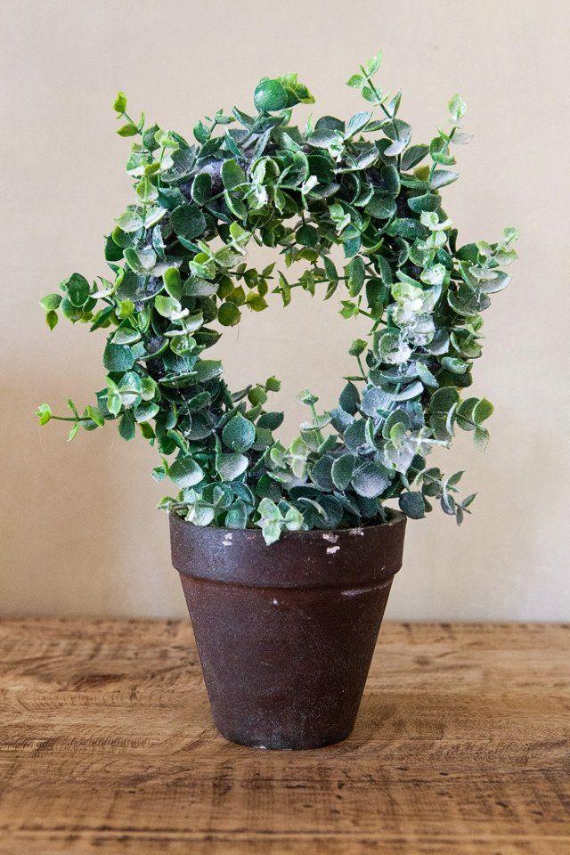 Small Eucalyptus Wreath in Pot