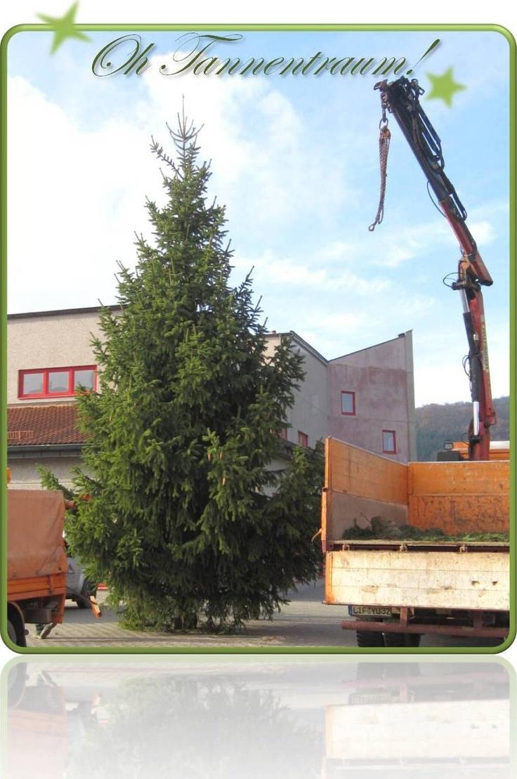 Weihnachten bei BAUR  #Baur Versand #BAUR-Mitarbeiter #Dekoration #Dekorieren #Weihnachten #Weihnachtsdekoration #Weihnachtsshop #Winter #Wohnaccessoires