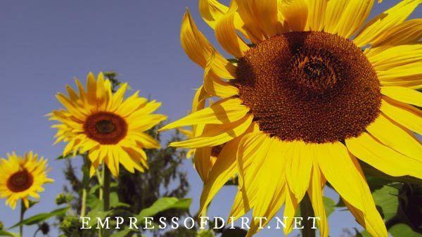 Pin On Empress Of Dirt Blog Creative Gardening