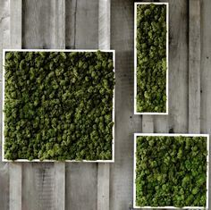 living art moss wall - Google Search