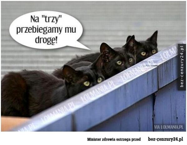 piatek_13go