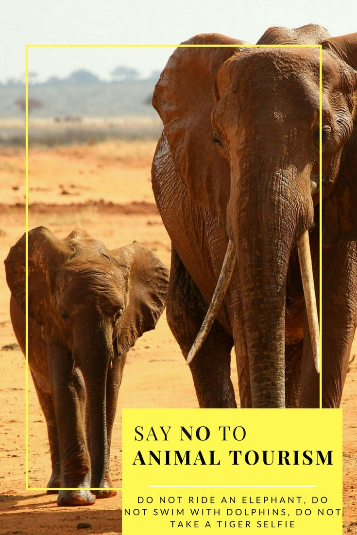 Stop riding elephants in Thailand and India, stop swimming with dolphins in enclosed pools, stop going to Sea World, stop taking selfies with tigers, stop walking with lions! | no to animal tourism | ethical travel | no elephant rides | animal tourism | ride an elephant |